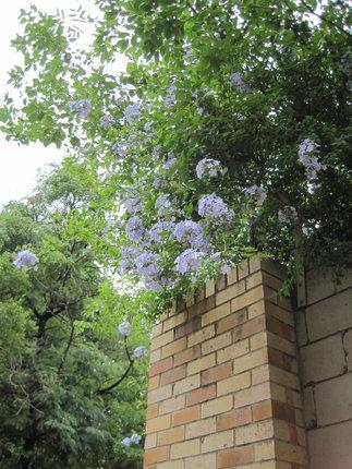 Sydney_5091