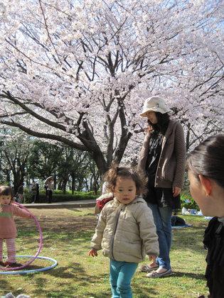 Sakura_0221