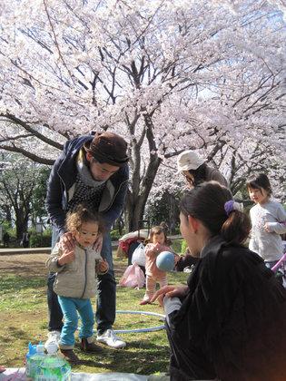 Sakura_0291